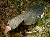 Разборные чучeла-флюгера кормящегося белолобого гуся - 10 штук