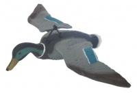 Кряква парящая (летящая) селезень